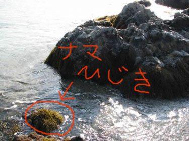 春の海草特集