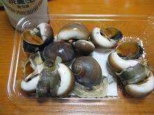 網のブログ-ツメタ貝
