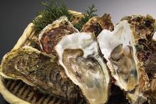 網のブログ-牡蠣