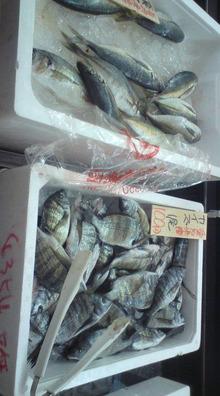 網のブログ-マックスバリウの魚屋さん