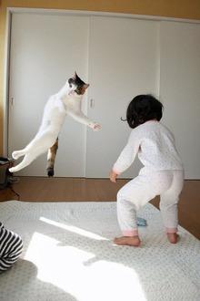 網のブログ-猫
