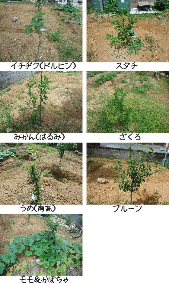 網のブログ-果樹