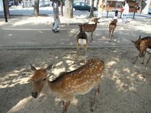 網のブログ-鹿