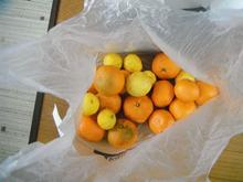 網のブログ-庭の柑橘類