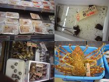 網のブログ-こっちの魚屋