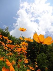 網のブログ-花