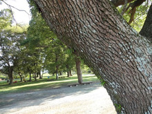 網のブログ-木