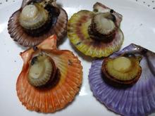 網のブログ-ヒオウギ貝