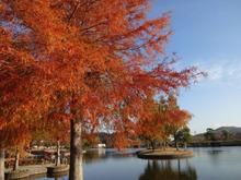 網のブログ-湖畔の紅葉