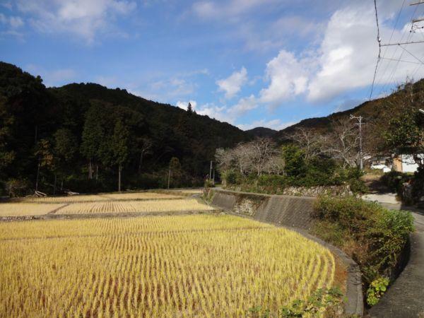 網のブログ-山村