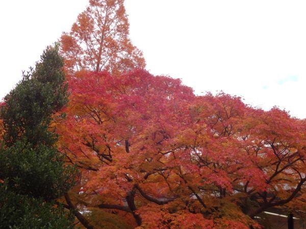 網のブログ-紅葉