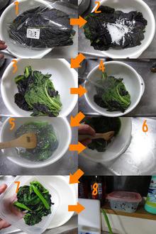 網のブログ-からし菜