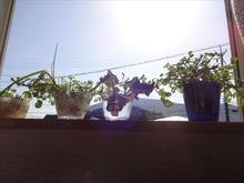 網のブログ-水耕栽培