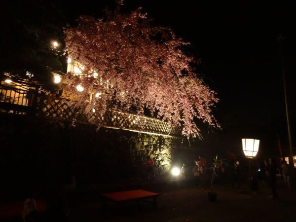 網のブログ-赤福本店裏の夜桜
