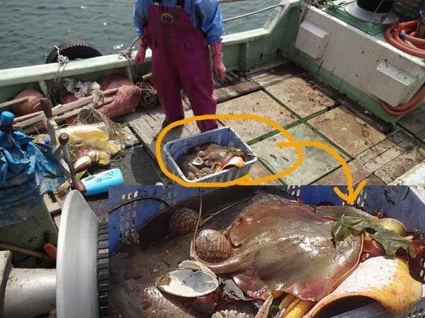 網のブログ-小浜漁港