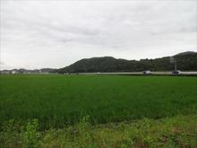 網のブログ-田んぼ