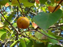 網のブログ-山柿