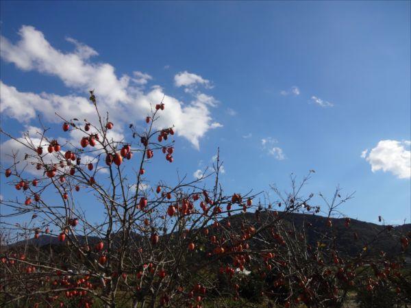 網のブログ-田舎の秋