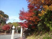 網のブログ-御幸道路