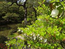 スズランに似た花 木