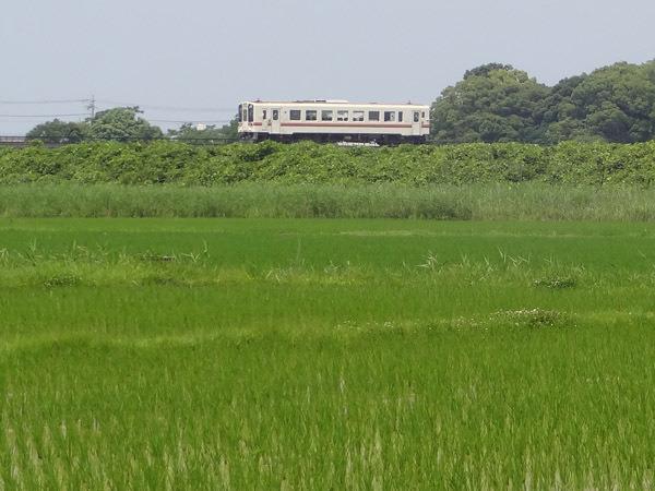 田舎の汽車