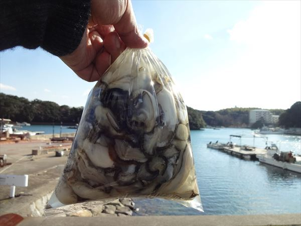【追記あり】牡蠣の書き入れ時
